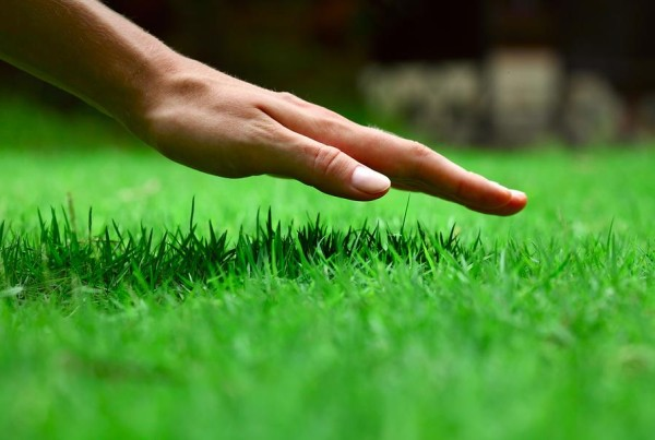 green angel lawn care